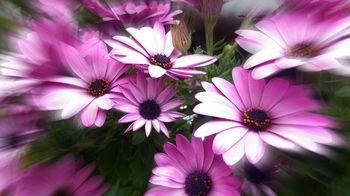 www.kizoa.com_imag1063.jpg